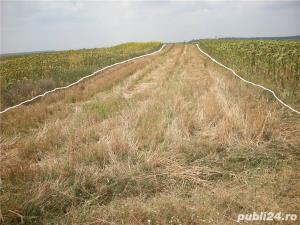 Teren agricol 5000m-Strejnic - imagine 4