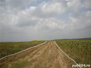 Teren agricol 5000m-Strejnic - imagine 3
