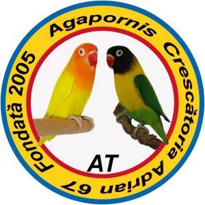 Vand papagali AGAPORNIS - imagine 7