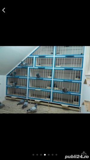 Pentru porumbei - imagine 6