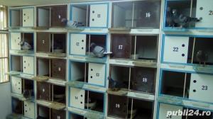 Boxe, odihnitoare, cuibare pentru porumbei - imagine 1