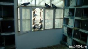 Boxe, odihnitoare, cuibare pentru porumbei - imagine 2