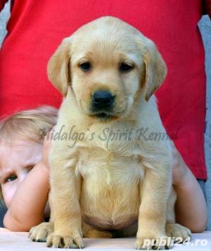 Pui Labrador Retriever cu pedigree tip A - imagine 8