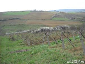 Teren Chicerea, Iasi, 6000 mp - imagine 7