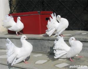 Porumbei albi de nunta  - imagine 2