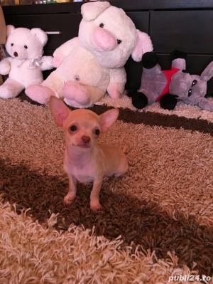 Chihuahua extra miny toy - imagine 4
