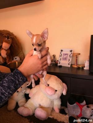 Chihuahua extra miny toy - imagine 3