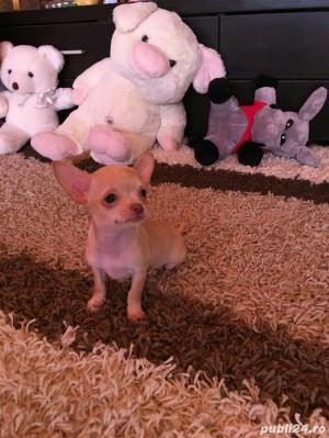Chihuahua extra miny toy - imagine 1