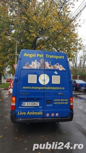 Transport Caini si Pisici Autorizat din Romania catre Anglia - imagine 5