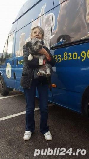 Transport Caini si Pisici Autorizat din Romania catre Anglia - imagine 13