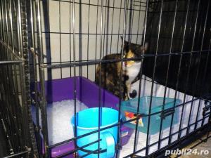Transport Caini si Pisici Autorizat din Romania catre Anglia - imagine 17