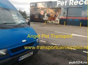 Transport Caini si Pisici Autorizat din Romania catre Anglia - imagine 1