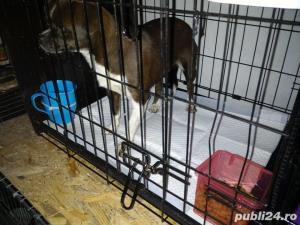 Transport Caini si Pisici Autorizat din Romania catre Anglia - imagine 18