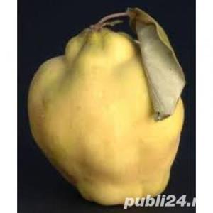 Pomi fructiferi GRATIS - imagine 2