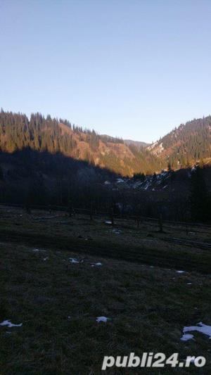Vand teren si casa la munte in apropiere de Vatra Dornei - imagine 3