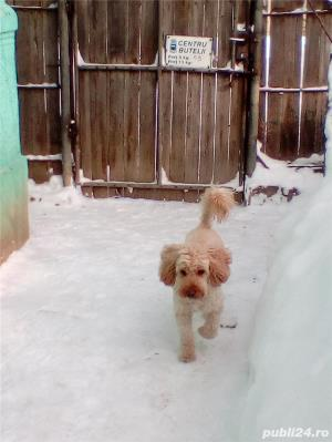 Ofer Pensiune canina Cazare canina Cazare pentru caini Giurgiu - imagine 1