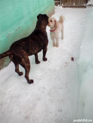 Ofer Pensiune canina Cazare canina Cazare pentru caini Giurgiu - imagine 2