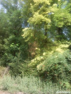 Vand domeniu 20 Ha natura in jurul casei tale. - imagine 8