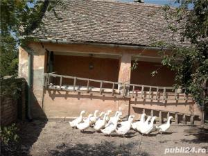 Vand casa in Gad comuna Ghilad, judetul Timis - imagine 3