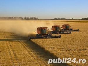 Jud Giurgiu, teren agricol - imagine 3