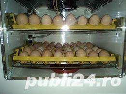 Incubator oua automat - imagine 2