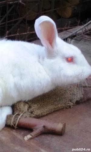Vand iepuri diferite varste - imagine 2