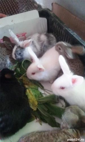 Vand iepuri diferite varste - imagine 6