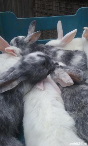 Vand iepuri diferite varste - imagine 4