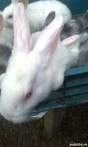 Vand iepuri diferite varste - imagine 9