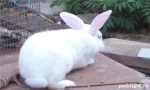 Vand iepuri diferite varste - imagine 8