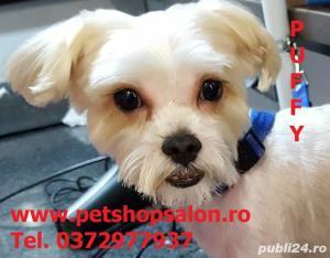 Tuns caine/Pachet cosmetic premium canin*  - imagine 3