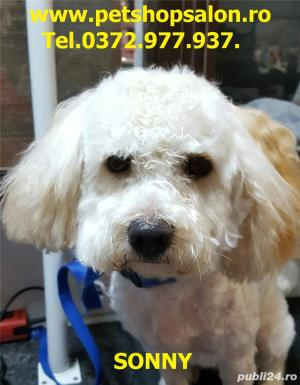 Tuns caine/Pachet cosmetic premium canin*  - imagine 8