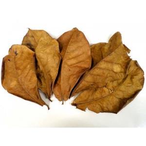 frunze catappa pentru acvariu creveti sau pesti  - imagine 4