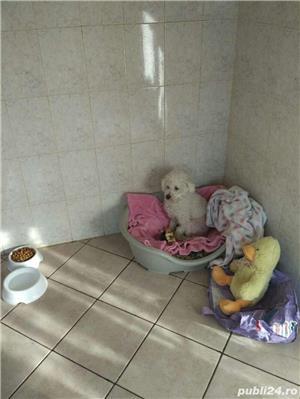 Pensiune canina - imagine 4