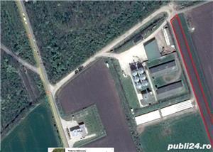 Teren Giurgiu langa padurea Balanoaia intre Lukoil si ferma, 5000 mp, DN5B - imagine 3