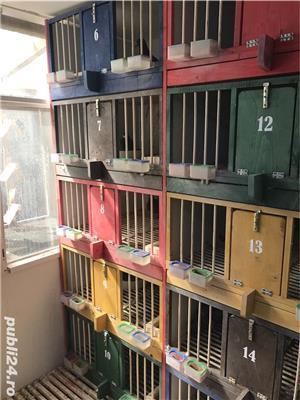 Boxe, cotete pentru porumbei - imagine 8