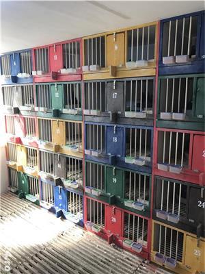 Boxe, cotete pentru porumbei - imagine 7