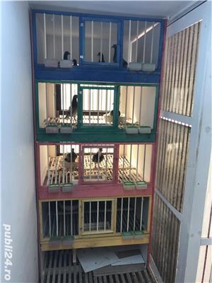 Boxe, cotete pentru porumbei - imagine 2