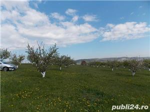 Livada pe teren intravilan, Orlat, jud. Sibiu 6700mp - imagine 2