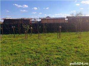 Casa P+M locuibila cu teren aferent 10 ari in Sacalaseni la 8 km de Baia Mare - imagine 6