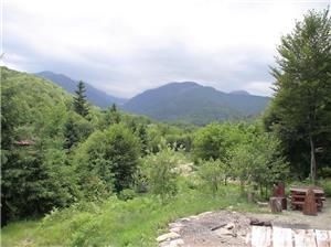 P.F.Arpasu de sus-Albota Sibiu 6000mp  teren intravilan utilitati,munte,rau,padure,strada asfaltata - imagine 1