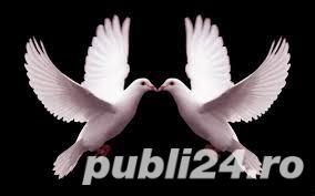 150 de lei porumbei albi pentru nunta ta Arges Pitesti - imagine 1