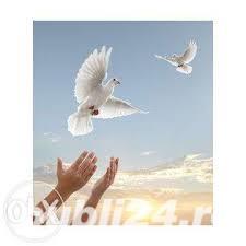 150 de lei porumbei albi pentru nunta ta Arges Pitesti - imagine 2