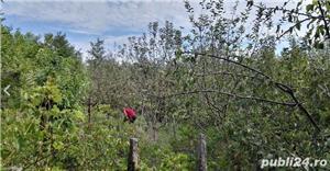 Casa la tara cu teren gradina 2000 m 40 km de Bucuresti - imagine 3