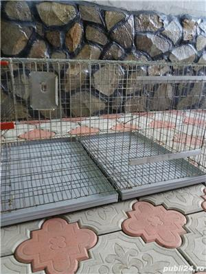 Custi iepuri - imagine 2