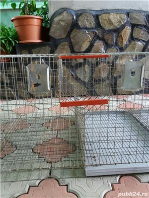 Custi iepuri - imagine 3