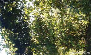 Vand teren Bistrita, Strada Livezi - imagine 6