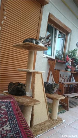 Ansamblu de joaca pentru pisici - imagine 1