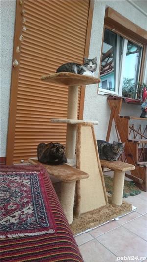 Ansamblu de joaca pentru pisici - imagine 2