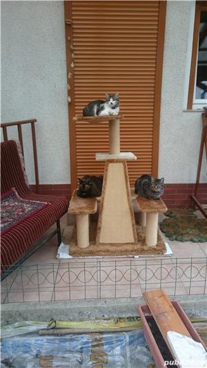 Ansamblu de joaca pentru pisici - imagine 3